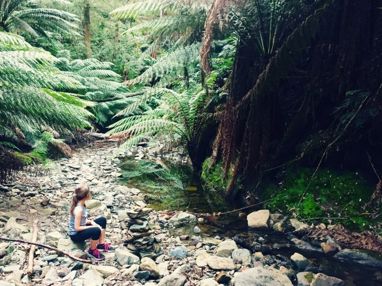 Holwell Gorge Falls walking track Tasmania Australia
